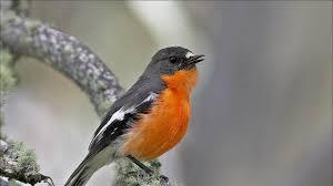 γυμνά πουλιά νέος δωρεάν μουνί βίντεο
